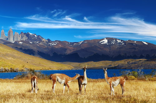 Best of Chile Holiday