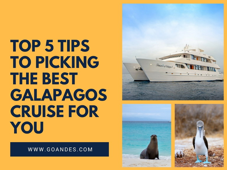 5 tips when picking the best galapagos cruise