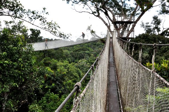 Iquitos Canopy Walkway