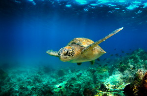 what is the best galapagos island to visit snorkelling