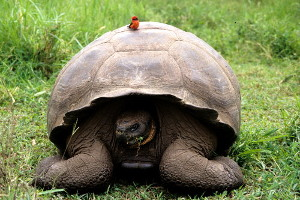 what is the best galapagos island to visit tortoise