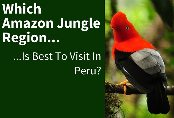 Which Jungle Region Is Best To Visit in Peru