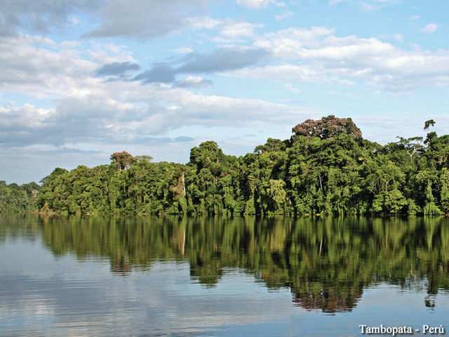 Tambopata - Amazon